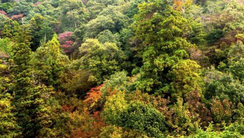 Berg Misen im Herbst, Miyajima, Hiroshima, Japan
