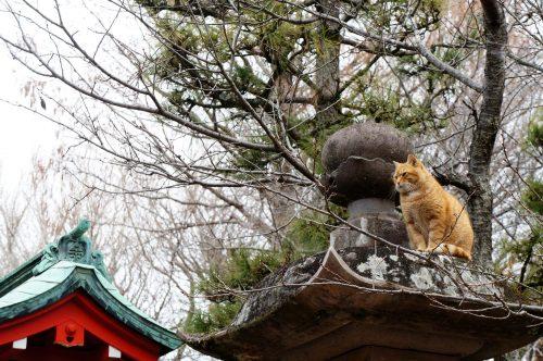 Katzen auf Enoshima