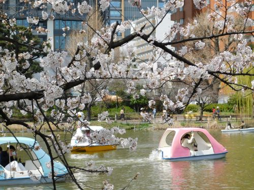 Eine Kirschblütentour durch Tokio