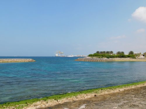 "Walbeobachtungstour mit ""Cerulean Blue Okinawa"" in Naha"