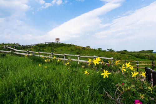 Wildblumen im Koshimizu Genseikaen im Osten Hokkaidos, Japan.