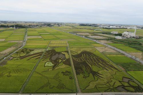 Reisfeldkunst (Tambo) in Gyoda, Präfektur Saitama, Japan.