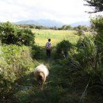 Eine Fahrradtour vom Berg Daisen zum Japanischen Meer