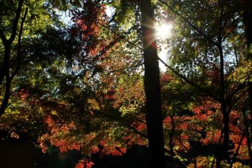 Herbstlaub im Sogenji Tempel in Okayama, Präfektur Okayama, Japan.