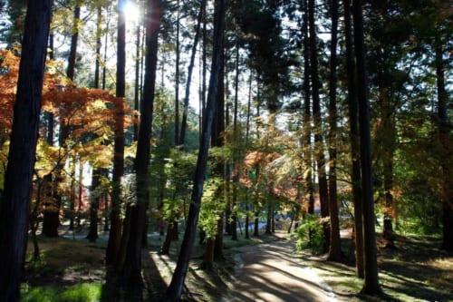 Sonnenstrahlen zwischen dem bunten Herbstlaub.