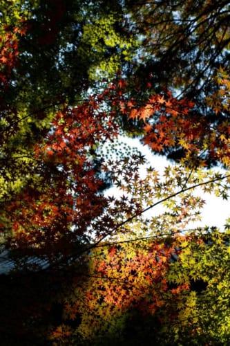 Buntes Herbstlaubt mit Blick in den Himmel, Okayama, Japan.