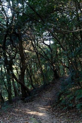 Ein versteckter Pfad auf dem Gelände des Sogenji Tempels, Okayama, Japan.