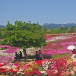 Festival de las Azaleas: paraíso de arte impresionista natural