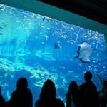 Acuario Kujukushima Umikirara: 20000 leguas de viaje submarino en Nagasaki