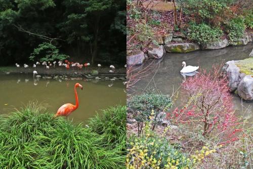 aves lago bio park