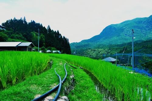 casa wakayama