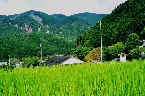 Casa compartida en Wakayama