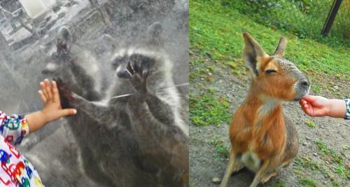 animales bio park
