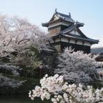 Sakura: ¿dónde ir si estoy en la región de Kansai?