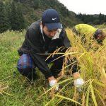 Ecoturismo, cosecha de arroz en Murakami