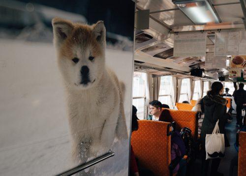 Fotografías de cachorros de Akita en el tren Akita Nairiku.