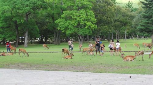 Nara, une ville peuplée de cerfs et de biches en liberté