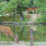 Nara – À la rencontre des biches et des cerfs qui peuplent la ville !