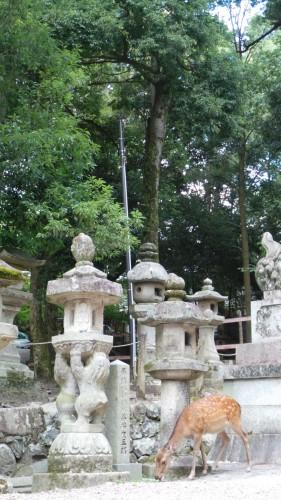 Biche solitaire profitant du calme d'un sanctuaire à Nara