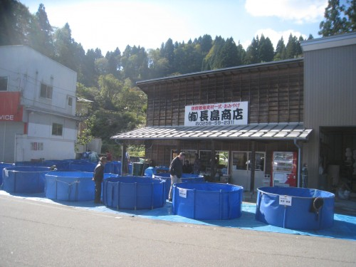 Acheter une carpe japonaise à Yamakoshi, Niigata, Japon.