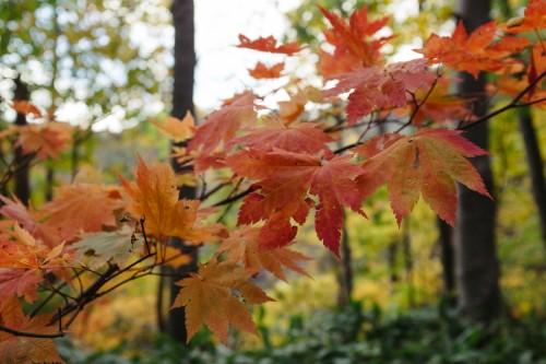 Les gorges de Hoheikyo offrent parmi les plus belles vues d'automne de Hokkaido, Japon.