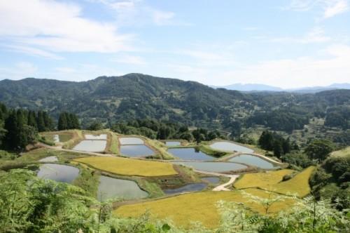 Les rizières en terrasse dans le village de Yamakoshi, dans la préfécture de Niigata au Japon