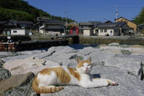 Paysage d'Ozu, mer de nuage, shikoku, ehime, île au chat, Aoshima