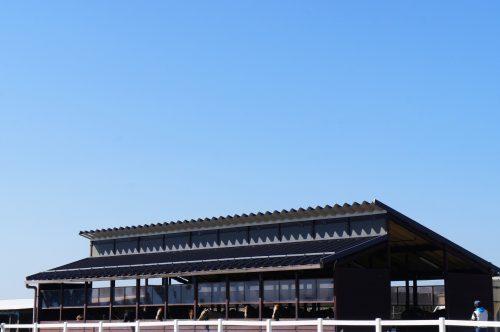 Randonner à cheval dans l'immense caldeira du mont Aso, Kumamoto, Kyushu, Japon.