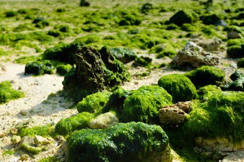 Coquillages et coraux recouverts d'algues sur la plage de la baie de Kabira à Okinawa, Japon