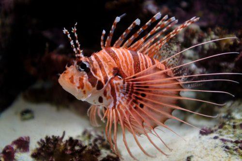 Poisson visible à l'aquarium Churaumi sur l'île d'Okinawa, Japon