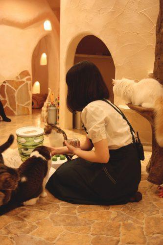 Activité pour les chats au café Temari no Oshiro dans le quartier de Kichijoji à Tokyo, Japon
