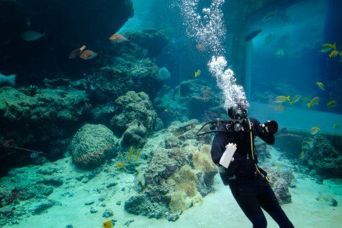 L'aquarium Churaumi sur l'île d'Okinawa, Japon