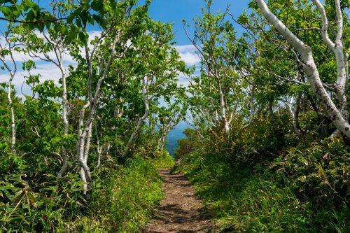 Sentier menant au sommet du Mt. Mokoto à Koshimizu, Hokkaido, Japon