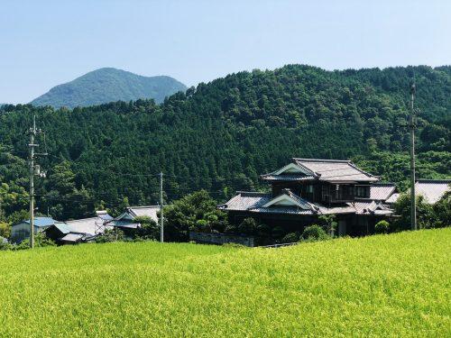 Au milieu des rizières de Toon, préfecture d'Ehime, Japon