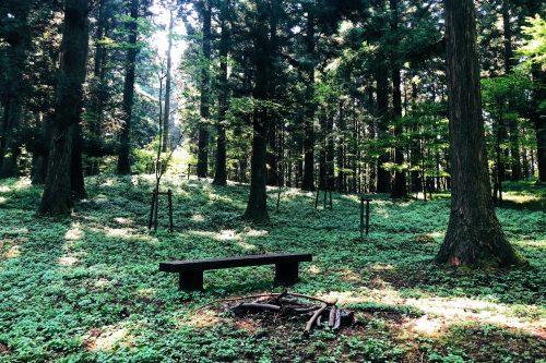 Dans le parc Shinrin près de Toon, Ehime, Japon