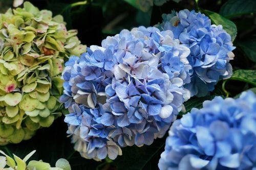 Les fleurs du parc Shinrin près de Toon, Ehime, Japon
