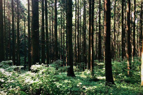 Les arbres du parc Shinrin près de Toon, Ehime, Japon