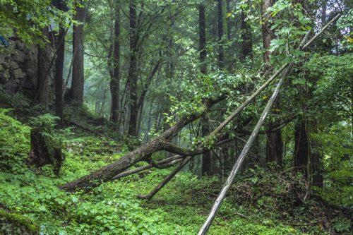 Dans la forêt du parc Yumori à Nakatsugawa, préfecture de Gifu, Japon