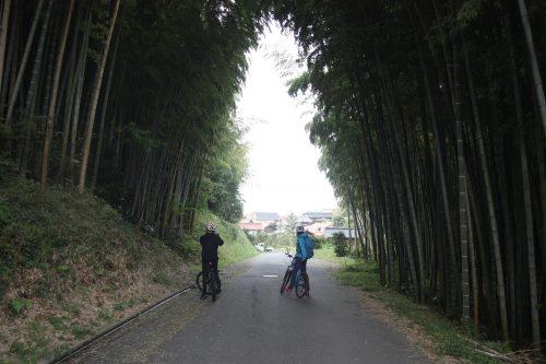 Forêt de bambous au pied du Mt Daisen dans la préfecture de Tottori, Japon