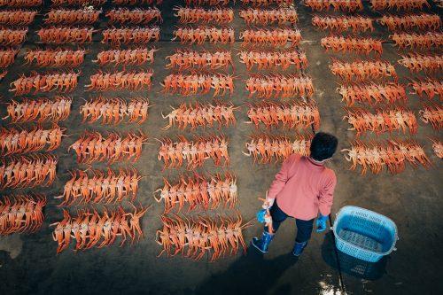 Crab auction at Shin-minato Kitokito Market.