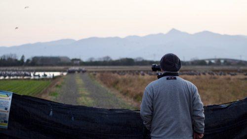 Observer les grues à l'aube dans les champs d'Izumi, préfecture de Kagoshima, Kyushu, Japon