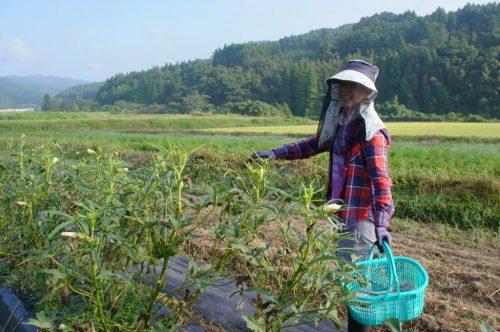 Séjour à la ferme à Kunisaki, préfecture d'Oita, Kyushu, Japon