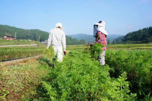 Séjour chez l'habitant à la ferme, dans la campagne d'Oita, Kyushu, Japon