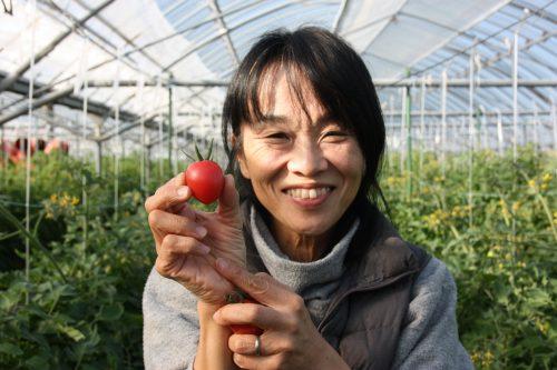 Mme Komiya dans sa serre de tomates cerises à Minamisatsuma, Kagoshima, Kyushu, Japon