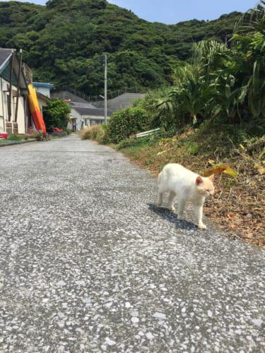 Chat au bord d'une petite route sur l'île de Fukashima