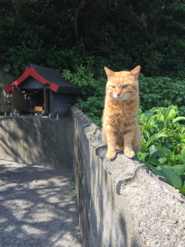Un chat vivant sur l'île de Fukashima, devant un petit sanctuaire shinto