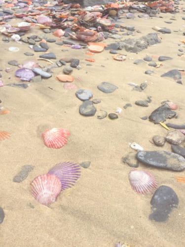 Des coquillages hiyougi sur la plage de Yakatajima