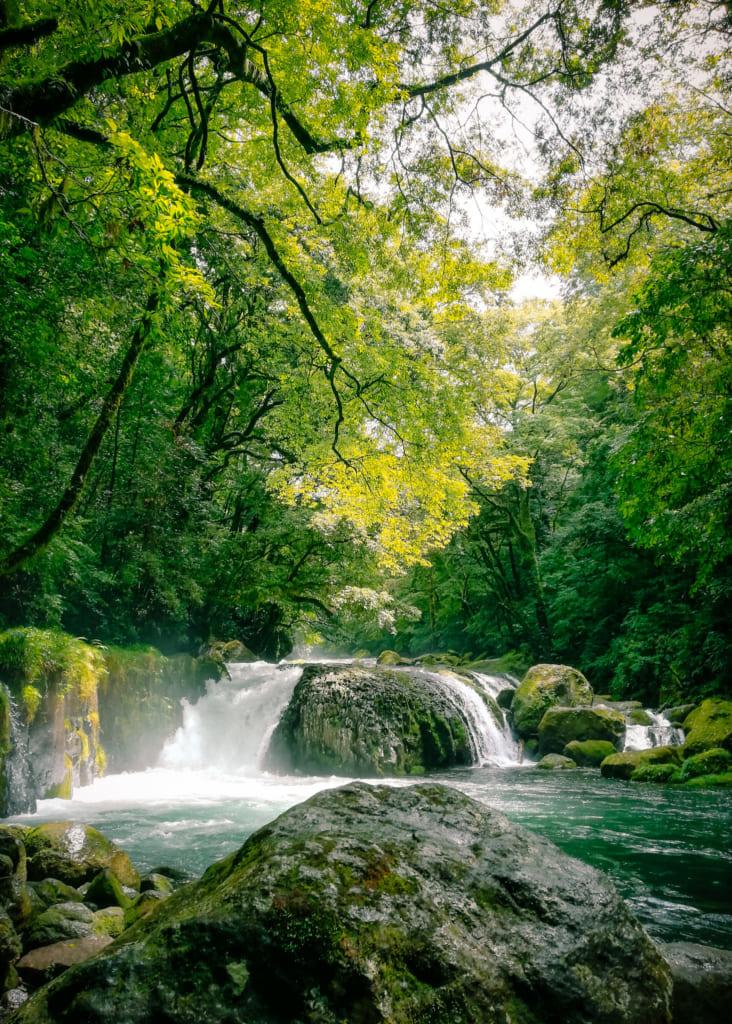 La cascade rei entourrée par les grands arbres de la forêt de kikuchi