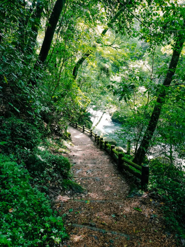 Chemin de randonnée qui s'enfonce dans les forêts luxuriantes des gorges de Kikuchi