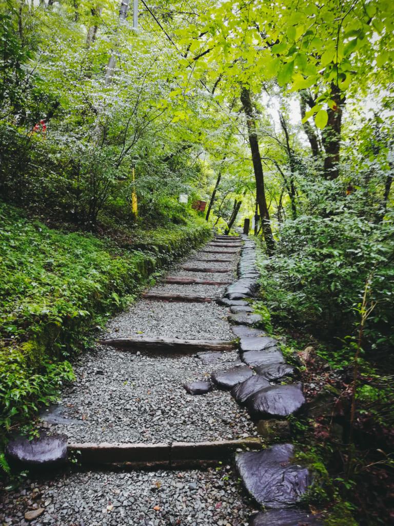 Quelques escalier qui s'enfoncent dans la forêt de kikushi